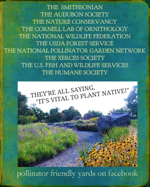 Copy of 345nativeplants14567
